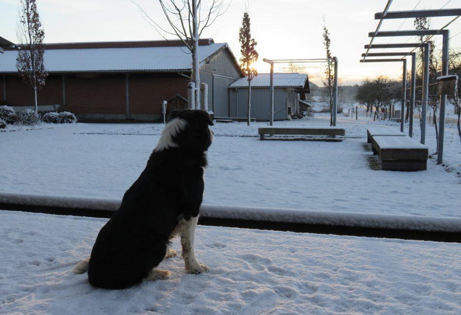 dunzie-im-winter