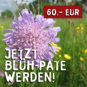 bluehpate-300x300
